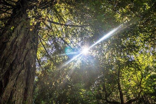 Forest, Wood Island, Son, Island, Wood, Leaf, Green