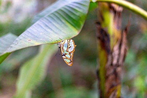 Butterfly, Colors, Nature, Butterflies, Wild, Beautiful