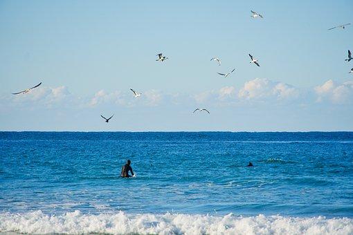 Surfer, Dolphin, Birds, Ocean, Aquatic, Action, Nature