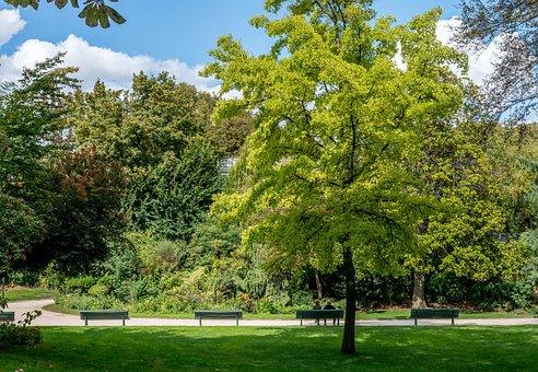 Paris, Garden, Champs Elysees, Couple, Tree