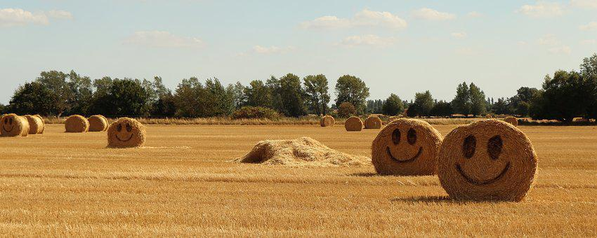 Straw, Halmballe, Agriculture, Harvest, Summer, Happy