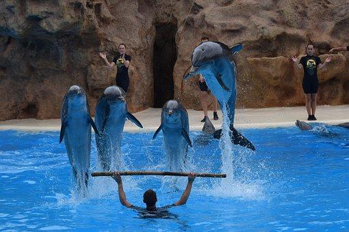 The Loro-parque, Dolphins, Tenerife