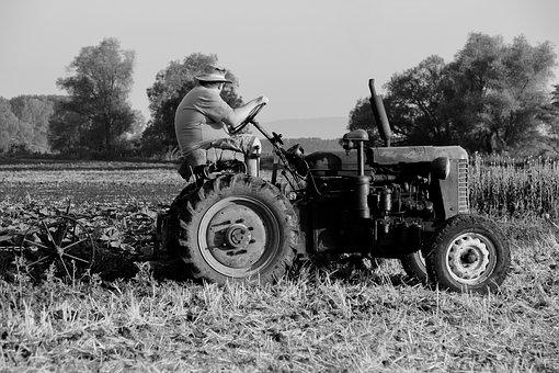 Field, Tractor, Tractor Driver