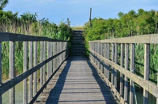 Web, Boardwalk, Bridge, Wooden Bridge