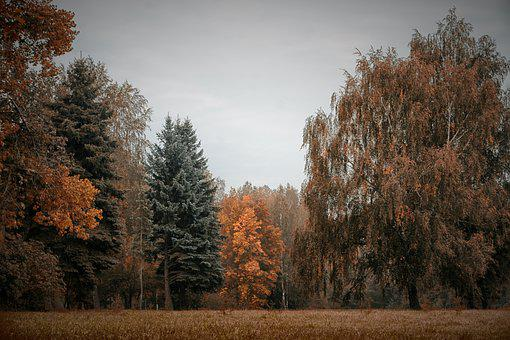 Fall, Autumn, Landscape, Forest, Nature, Leaf, Red