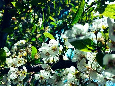Flowers, Tree Branch, Spring, Blossom, Leaf, Roses