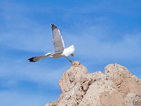 Seagull, Cala Ratjada, Mallorca