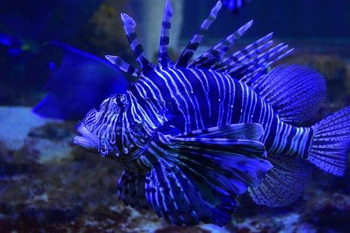 Aquarium, Fish, Water, Underwater, Marino, Nature