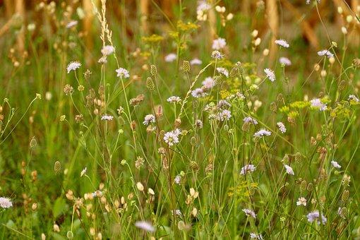 Meadow, Plants, Alpine, Flowers, Nature, Summer