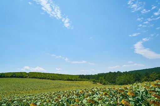 Landscape, Green, Nature, Field, Sky, Environmental