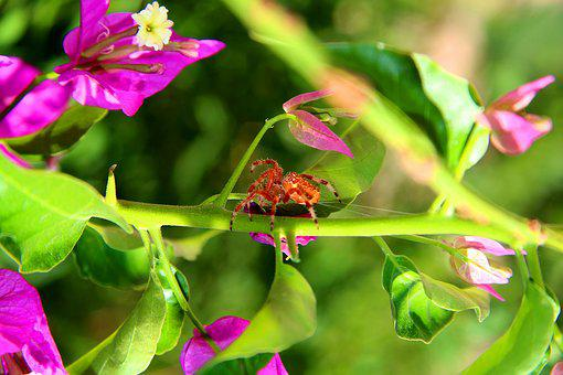 Nature, Spider, Net, Green, Flowers