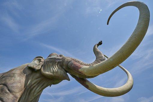 Mammoth, Extinct, Tusk, Pachyderm, Mammal, Ivory