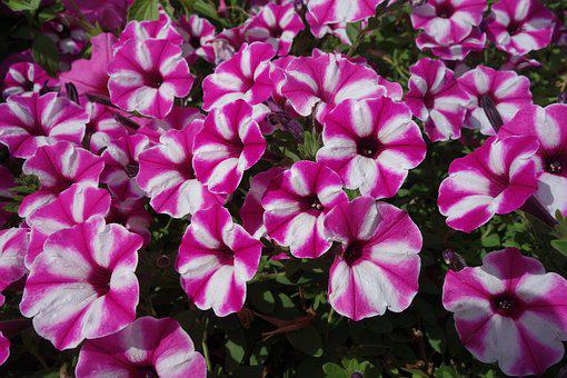 Garden, Plant, Blossom, Bloom, Flower, Flora, Summer
