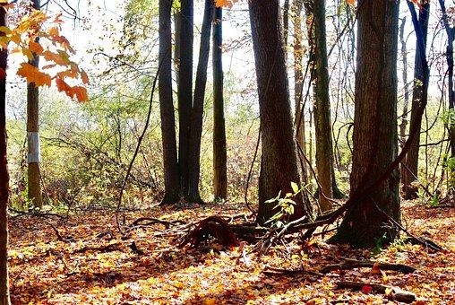 Light, Woods, Trees, Green, Fall, Autumn, Landscape