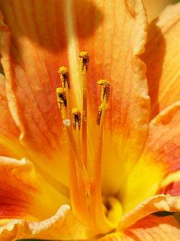 Ovary, Stamen, Stamens, Anther, Pollen, Bee Pollen