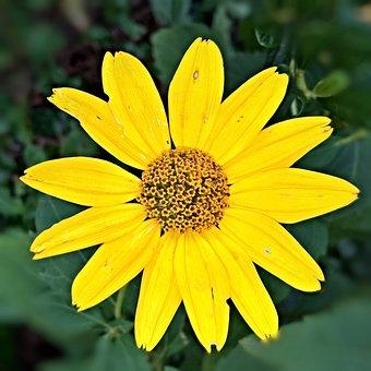 Autumn Flower, Plant, Single Bloom