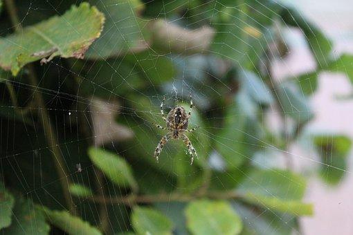 Spider, Animal, Web, Cobweb, Nature, Close Up