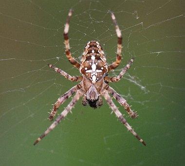 Spider, Web, Macro, Sunlight, Animal, Spooky, Horror