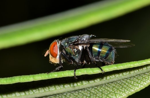 Fly, Housefly, Insect, Creature, Animal, Insectoid