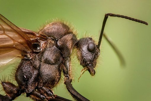 Ant, Macro, Animal, Insects, Small, Magnification