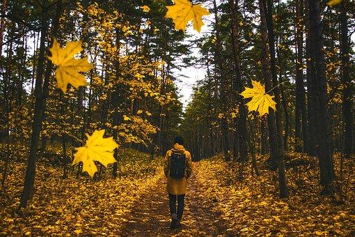 Autumn, Fall, Man, Walking, Falling Leaves, Colorful