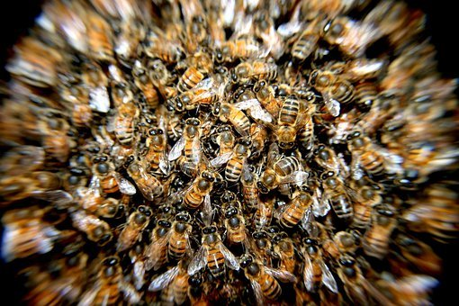 Bees, Swarm, Insects, Macro, Many, Hive, Bee Hive