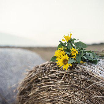 Sunflower, Hay, Late Summer, Summer, Mood, Hay Roll
