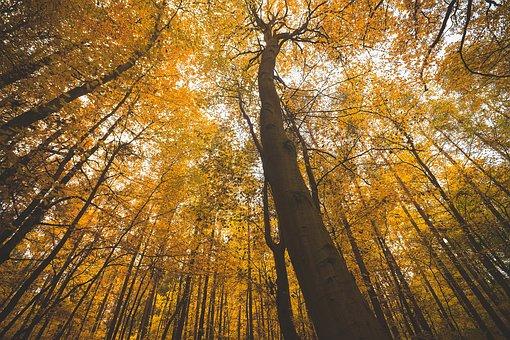 Forest, Autumn, Nature, Park, Fall, Season, Foliage
