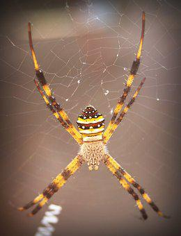 Spider, Arthropod, Closeup, Underbrush, Tropical, Copy