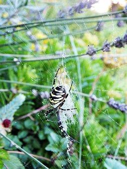 Spider, Garden, Summer, Web, Spider Macro, Insect