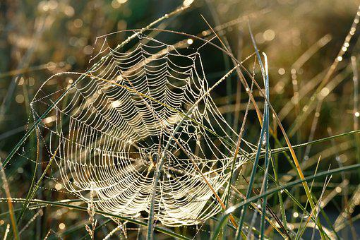 Spider Web, Webs, Spider, Nature, Dew, Cobweb, Morning