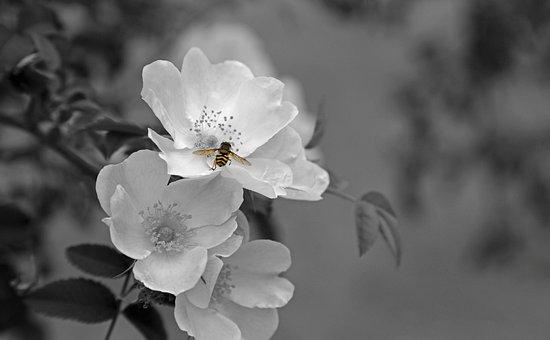 Flower, Blossom, Bloom, Plant, White, Back Light, Color
