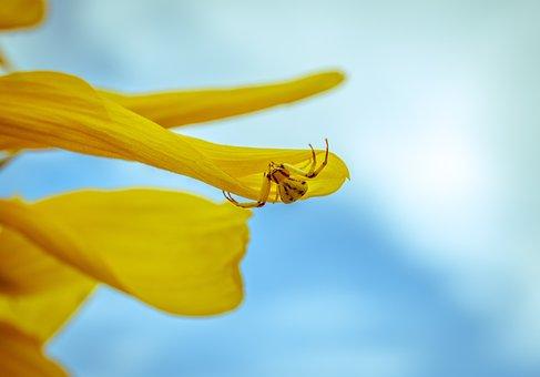 Spider, Sunflower, Nature, Sky, Blue, Yellow, Arachnid