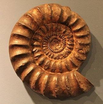 Ammonit, Petrification, Fossil, Fossil Beast, Snail