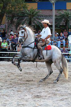 Cowboy, Horse, Rider, Party, Animal, Colt, Stable