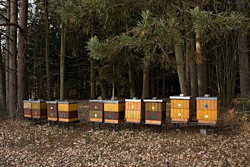 Apiary, Forest, Breeding Of Honey Bees, Trees