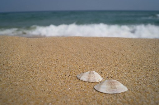 Sea, Clam, Shell, Ocean, Water, Wave, Calm, Summer