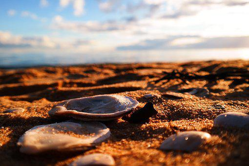Sands, Shells, Clam, Beach, Nature, Clouds, Sky, Blue