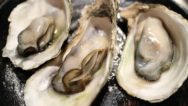 Oyster, Shell, Clams, Dry Bay, Seafood, Sea Products