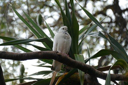 Dove, Palm, White