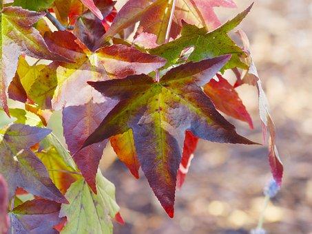 Leaves, Foliage, Fall, Colored, Autumn Leaves, Macro
