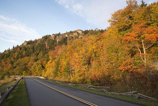 Fall, Fall Leaf, Fall Leaves, Autumn, Nature, Season
