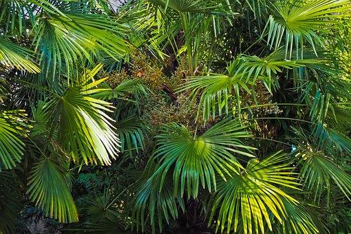 Palm Trees, Jungle, Nature, Landscape, Plant, Green