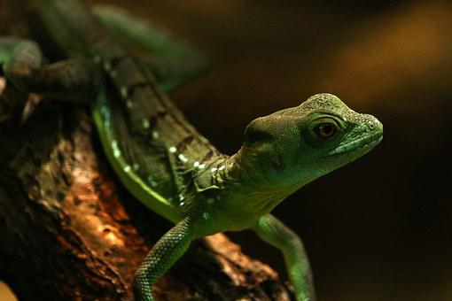Gecko, Zoo, Green, Lizard, Reptile, Terrarium, Climb
