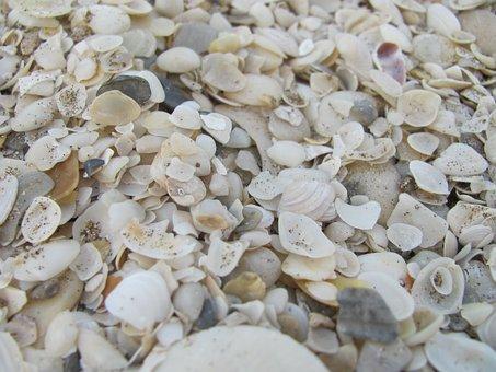 Clams, Sand, Sea, Shells, Beach, Water, Edge Of The Sea