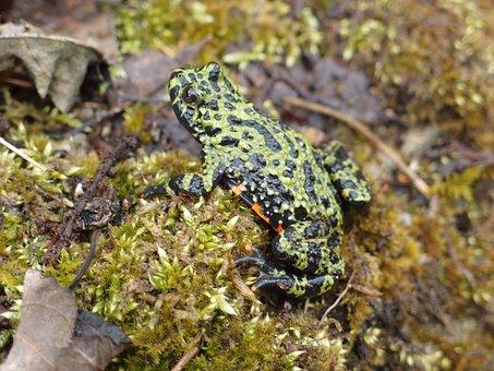 Frog, Shaman Frog, Spring, Sir Chips, Shaman, Nature