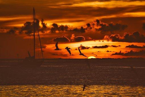 Sunset, Dusk, Fishing Boat, Ship, Birds, Gulls