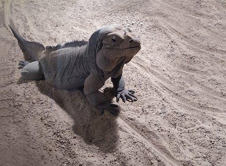 Cologne Zoo, Terrarium, Reptile, Dragon, Creature