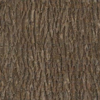 Bark, Wood, Tree, Seamless, Texture, Albedo, Base