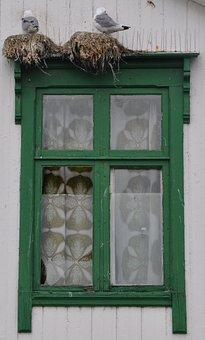 Window, Gulls, Wooden Windows, Old Window, Architecture